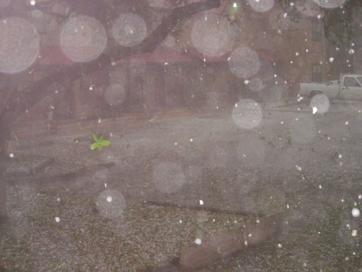Now the hail's coming down so hard and fast, I can't take a picture through it! Go figure.