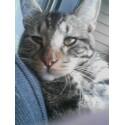 stray-cat1